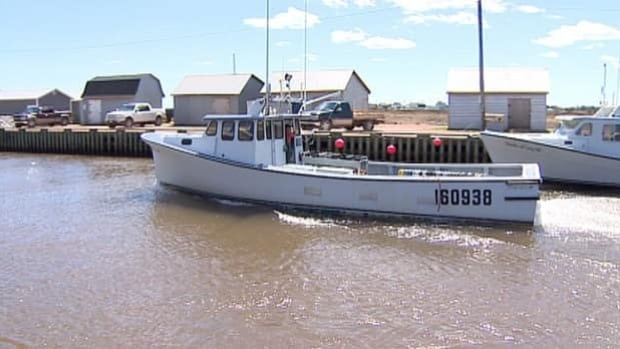 Many lobster boats in the Tignish area were out on the water Monday. Fishermen had tied up their boats in protest of low prices.