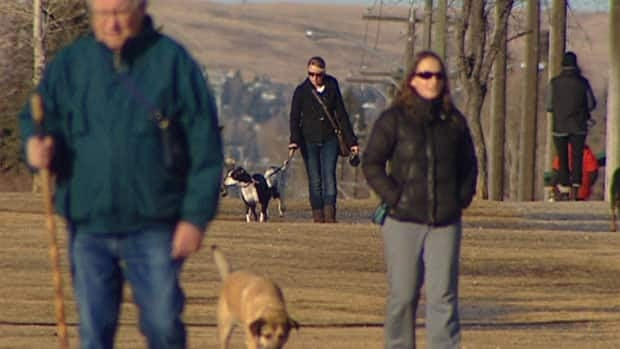 People take their dogs out for a walk in Calgary, on an unseasonably warm day in January. This winter has been one of the warmest on record, with temperatures 3 to 6 C above normal across most of the country in January, according to Environment Canada.