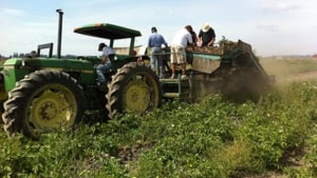 Fraser Valley farmers are busy pulling in their crops.