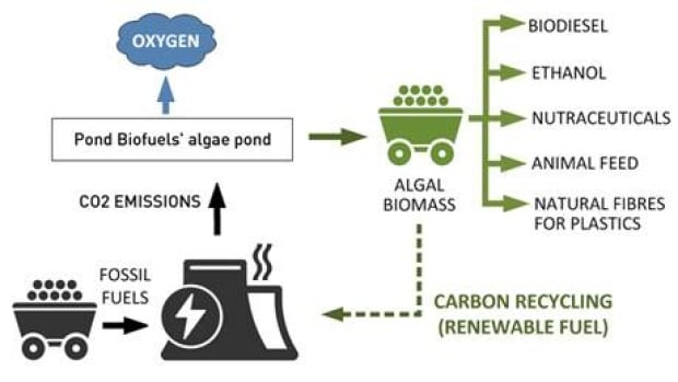 mi-pond-biofuels2-460