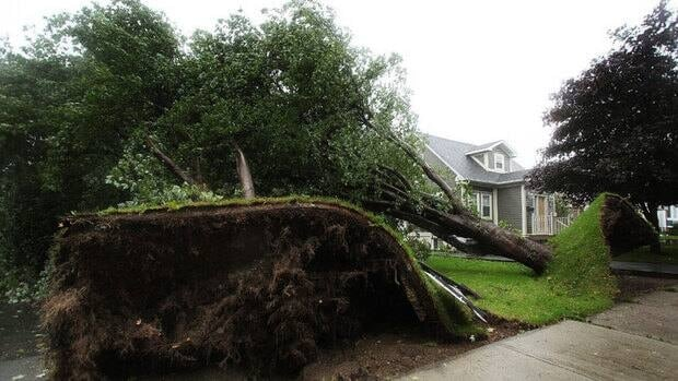 High winds from Hurricane Igor topple trees in St. John's in 2010. The Canadian Hurricane Centre said Friday that regardless of the number of hurricanes forecast for 2013, expected to be an 'active' season, it responds to four or five tropical cyclone events each year.