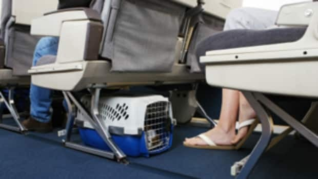Both major airlines have banned taking pets as cargo during the upcoming holiday season.