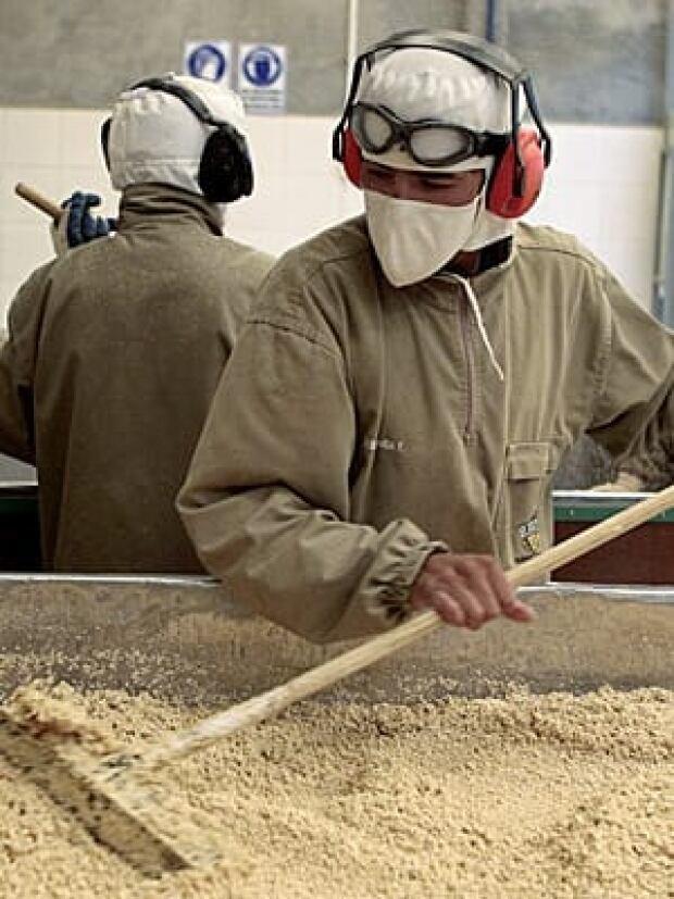 quinoa-300