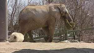 inside-elephants051211
