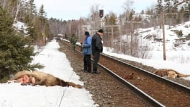 mi-dead-elk-train-300