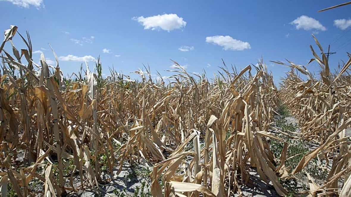 The U S Drought Freak Occurrence Or A Changing Climate Technology Science Cbc News