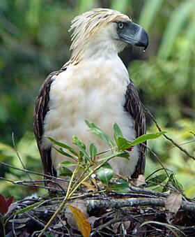 1 in 8 bird species threatened with extinction