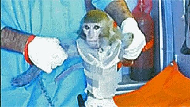 si-iran-monkey-300