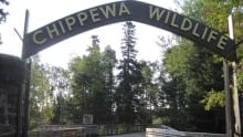 hi-tb-chippewa-park-zoo-ent