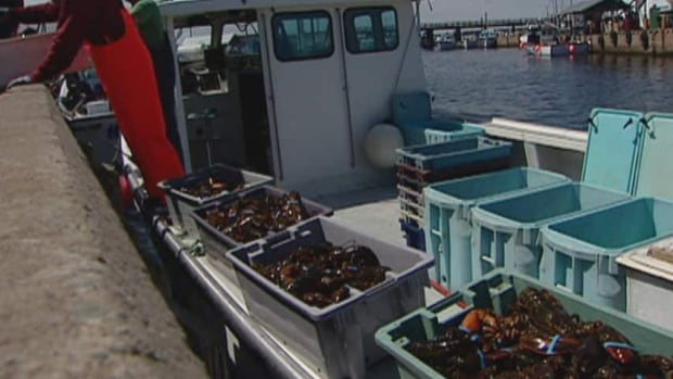 Maritime seafood processors are worried that foreign worker restrictions will cause labour shortages in the industry just as spring lobster season sets to open on the Northumberland Strait and Gulf of St. Lawrence. (CBC)