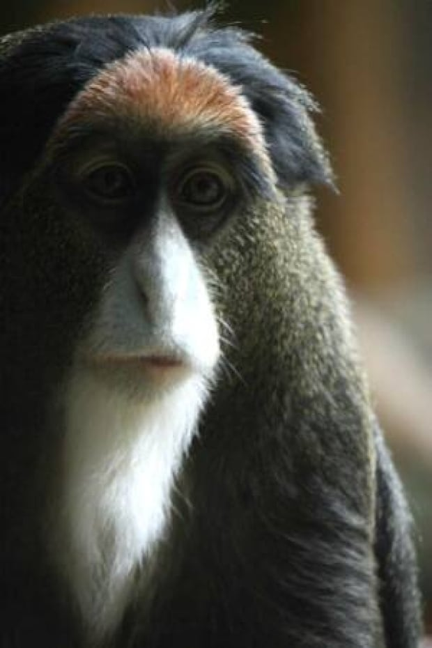 si-monkey-labby