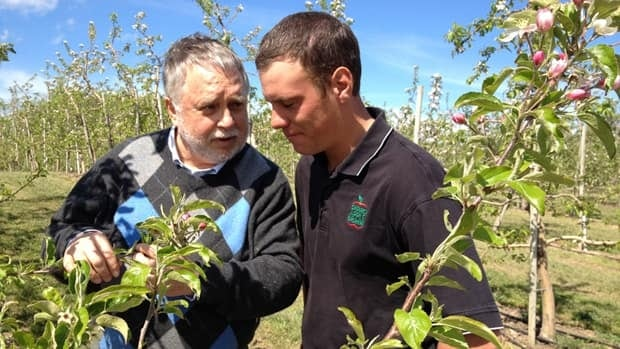 Agriculture Minister Ted McMeekin and farmer Richard Feenstra examine the apple blossoms.