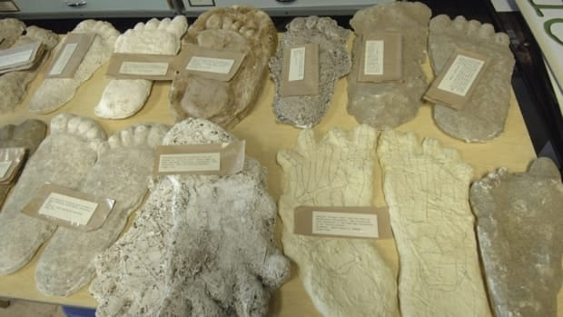 A large selection of Bigfoot footprint casts at the Idaho Museum of Natural History. Researchers at Oxford University and Lausanne Museum of Zoology are asking the public to send them hair samples they think came from the mythical ape-like creature so they can perform DNA tests on them.