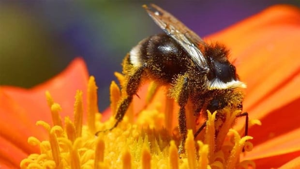 Neonicotinoids are believed to be a major contributor to bee-colony collapse and other problems related to the bee population.