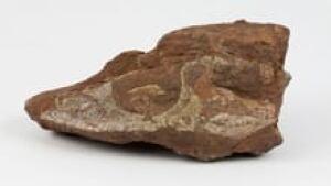 ns-si-fossil-skull-220