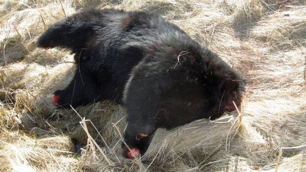 Bears' Schedule
