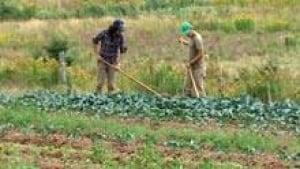 si-nb-local-farm-220