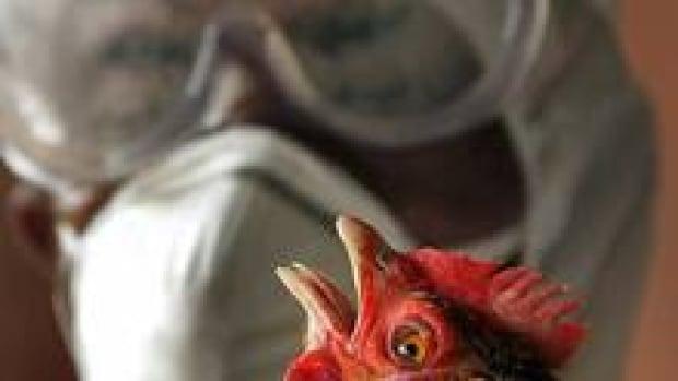 si-bird-flu-science-220-cp-