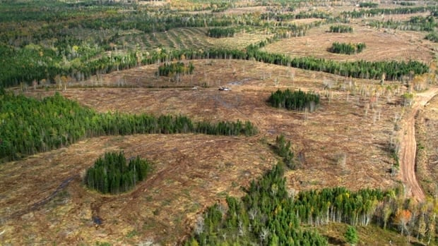 A swath of forest near Truro has been logged, leaving a few clumps of trees within bare patches.