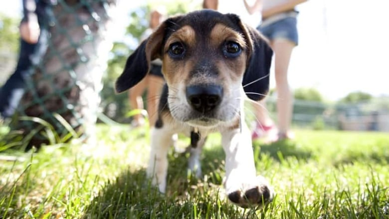 12 Most Dog Friendly Campgrounds In Ontario Cbc News