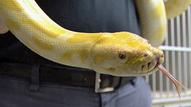 Across Canada, regulations governing exotic pets vary widely, and animal welfare groups have long argued for stronger regulations.