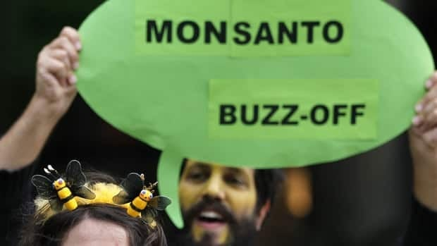 Public opposition to Monsanto has been widespread in Europe. Here, an activist from Friends of the Earth Europe, holds up a placard during a 2011 protest outside Monsanto's office in Brussels over the labelling of honey containing pollen from genetically modified maize plants. Cross-contamination of neighbouring crops has been one of the major complaints surrounding GMOs.