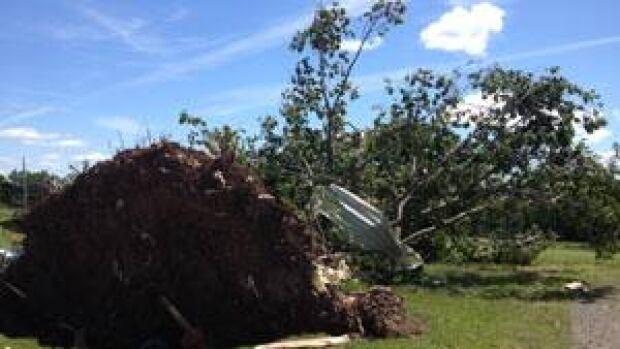 mi-tree-ripped-up