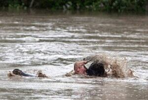 fi-130621-alberta-flood-momo-cat-swim-5