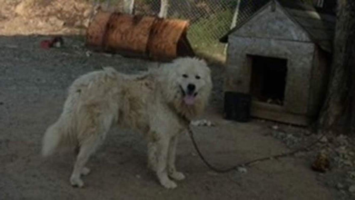 Dog Rescue Halifax Ns