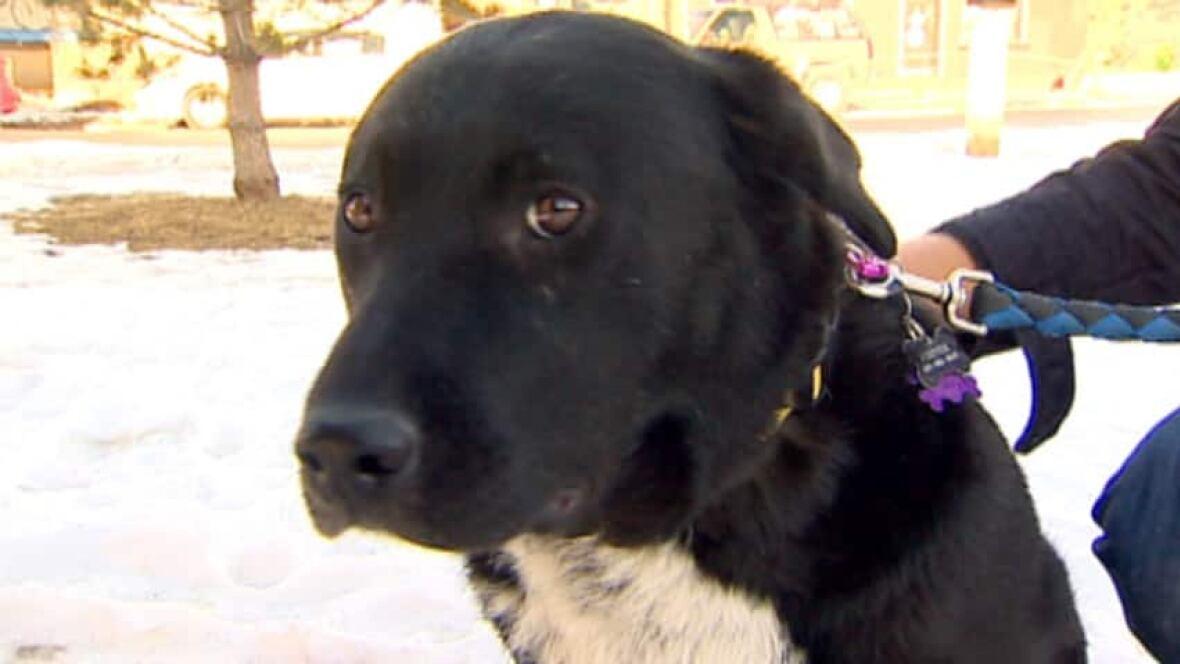 Okotoks Dog Rescue