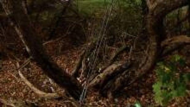 tree-crash_220x124_1