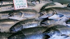 mi-king-salmon-istock