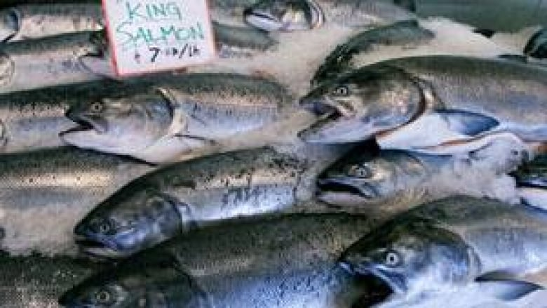 King salmon numbers could recover in Yukon | CBC News