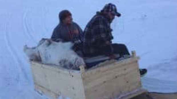 Although the N.L. government banned hunting all caribou for five years, the Innu Nation told CBC they would hunt 150 male caribou for each community between now and April 2013.
