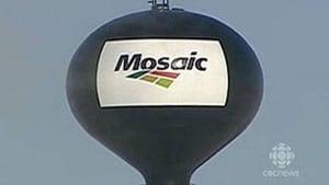 hi-mosaic-company