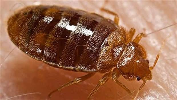 The city of Montreal is asking people to take precautions this moving day to prevent the spread of bedbugs.