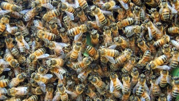 Swarms of bees are not unusual, says city forester Don Murray.