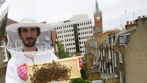 Rise in urban beekeeping may be bad for bees, scientists warn | CBC News