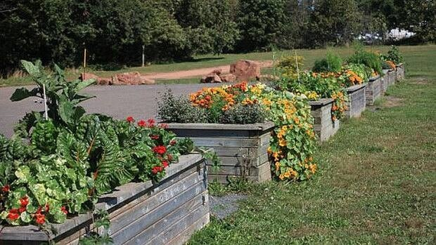 The City of Charlottetown has started growing food plants in containers in Victoria Park.