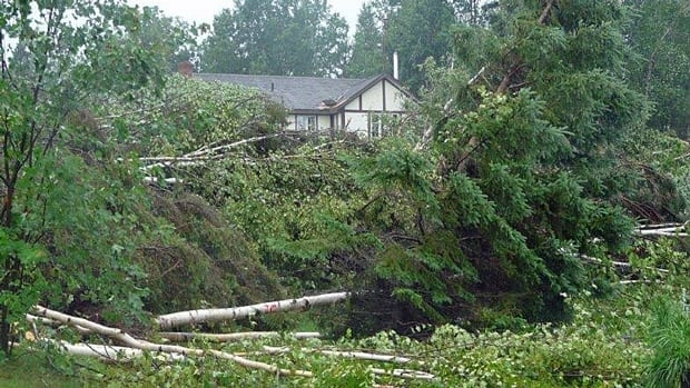 Environment Canada was checking into reports that a tornado touched down near Massey, Ont. on Thursday.