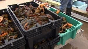 pei-lobster_852x479_1-4col