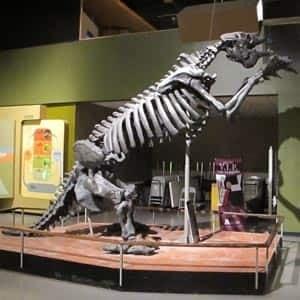 sm-300-giant-sloth-at-manitoba-museum