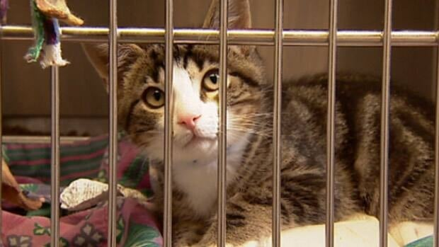 This cat was one of the animals awaiting adoption earlier this week at the Edmonton Humane Society.