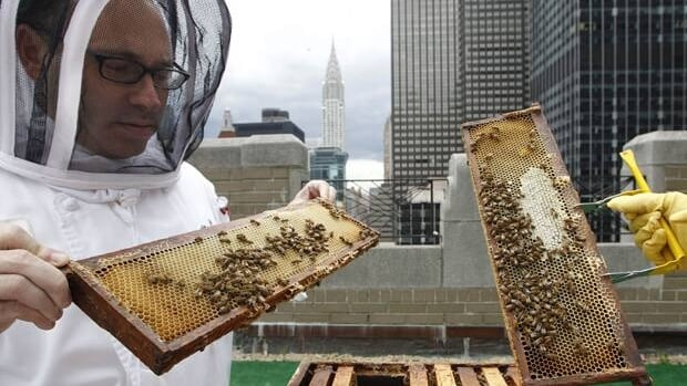 Waldorf-Astoria sous chef Josh Bierman inspects honeybees residing in hives on the hotel's 20th floor roof in New York, June 5.