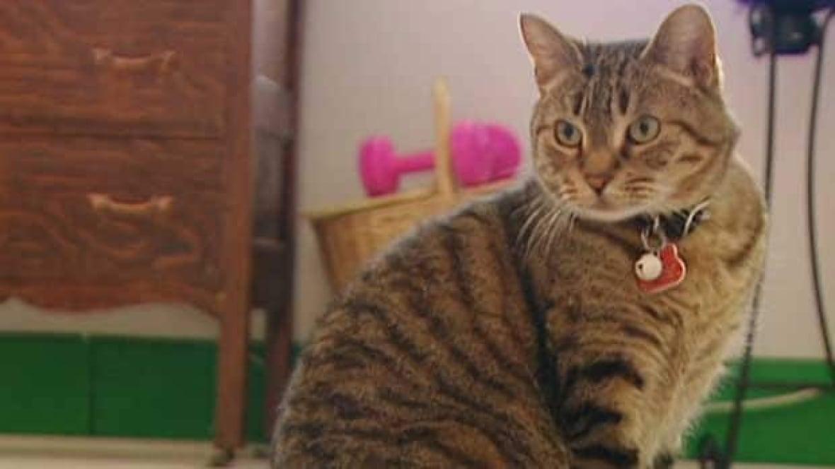 Cat Pet License Edmonton