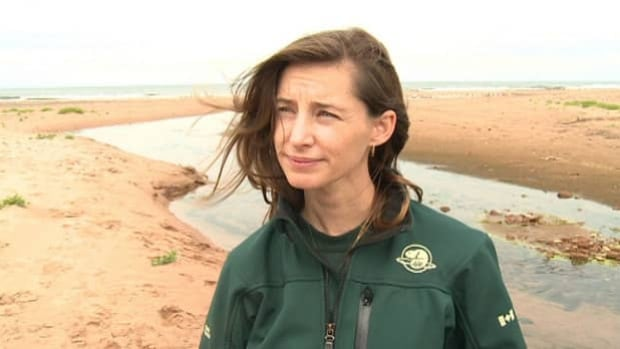 The beach streams are inviting, but bacteria can make them unsafe to play in, says Arja Page.