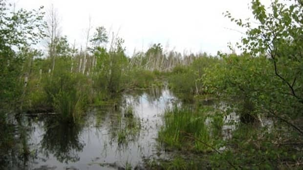 The Wainfleet Bog caught fire last summer, causing the peat moss to burn for several weeks.