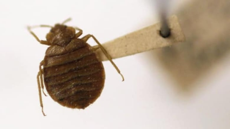 How to Eliminate Night Bed Bug Bites in Bed