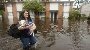 si-flood-dog-rtr37aio