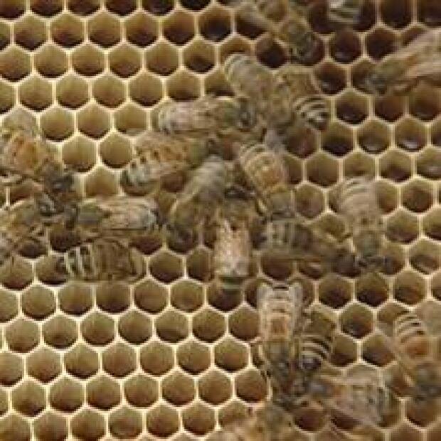 220-bees-newfoundland-20120719